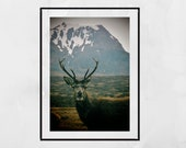 Stag Photography Print, Glencoe Scotland, Stag Print, Stag Wall Art, Wildlife Photography, Wildlife Photo, Wildlife Print, Stag Gift, Decor