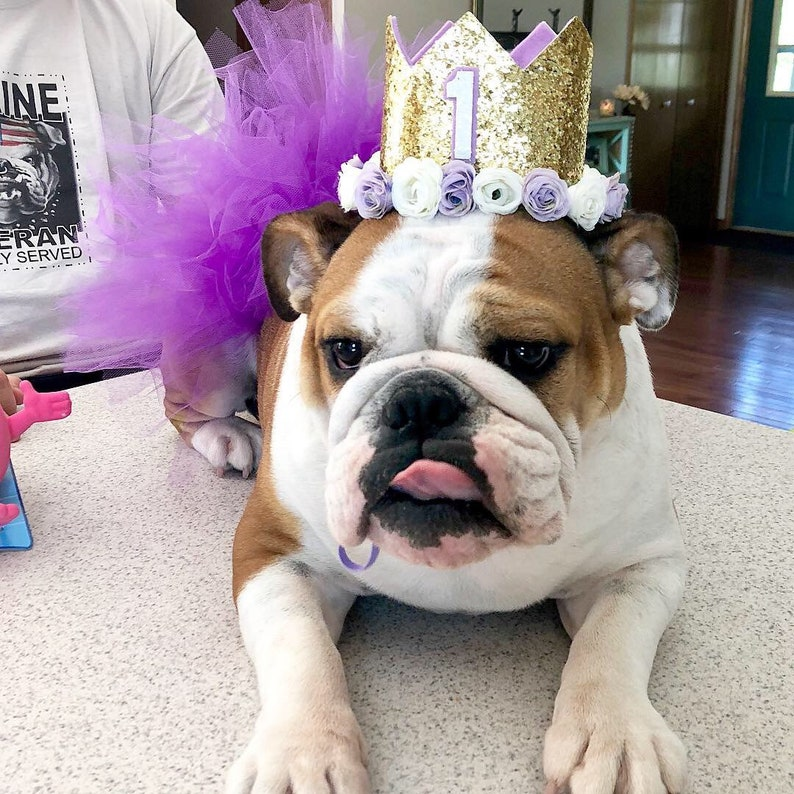 Dog Birthday Hat 1st Crown