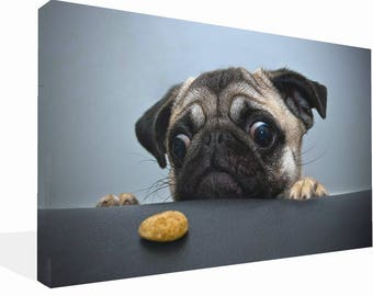 Cute Pug Dog Wide Eyed  Print Wall Ar Canvas Ready To Hang Or Poster Print