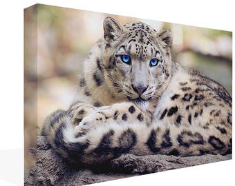 Sitting Snow Leopard Canvas Print  Wall Art Ready To Hang Or Poster Print