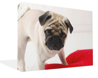 Cute Pug Dog  and Red Cushion Canvas Print Wall Art Ready To Hang Or Poster Print