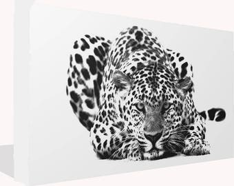 Black and White Big Cat Leopard  Print Wall Art Ready To Hang Or Poster Print