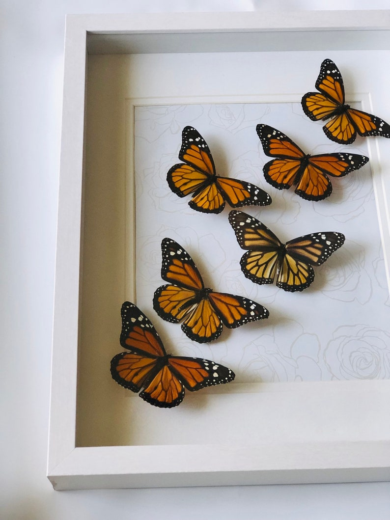 insect art butterfly art Earthy home decor natural decor real butterfly in frame nature decor entomology bohemian art boho