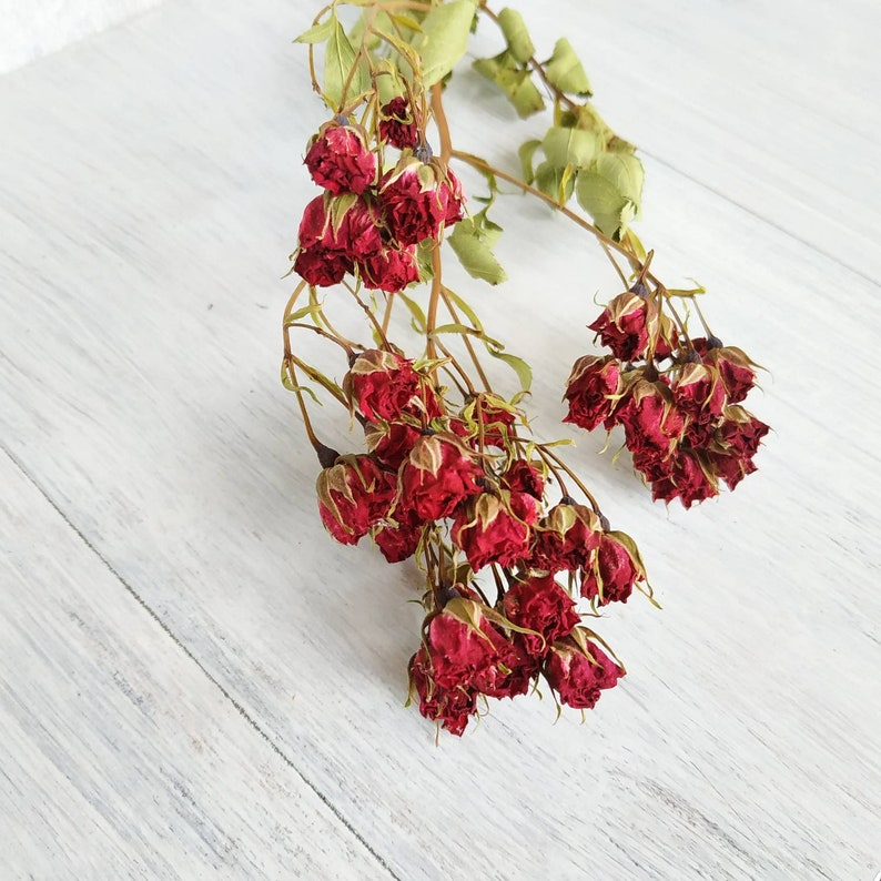 Small dried roses Dried roses bouquet Dried mini roses flower with stem Dry flowers burgundy