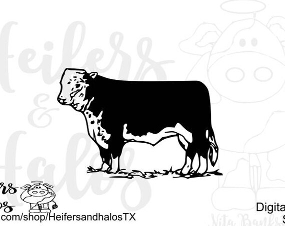 Mini Hereford Bull - svg and studio3 cut file.  Ranchy, punchy, livestock svg, for t-shirts, decals, and cups digital cut file