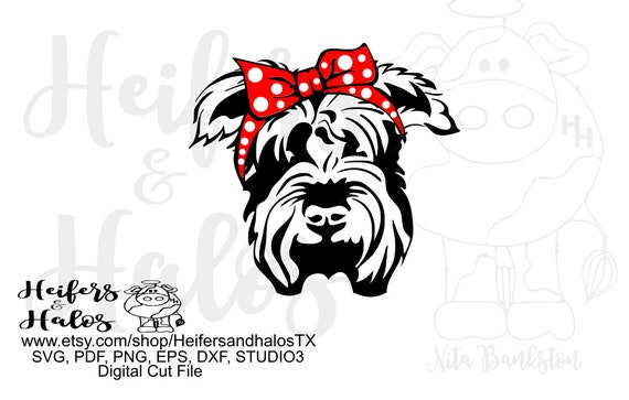 Bandana mini Schnauzer digital file, digital cut file, sublimation, printable, svg, pdf, png, eps, dxf, t-shirt design, cup design