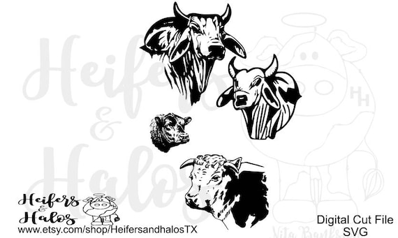 Just a whole lotta bull - brahman, hereford, angus, digital cut files, svg, pdf, png, eps, dxf, studio 3
