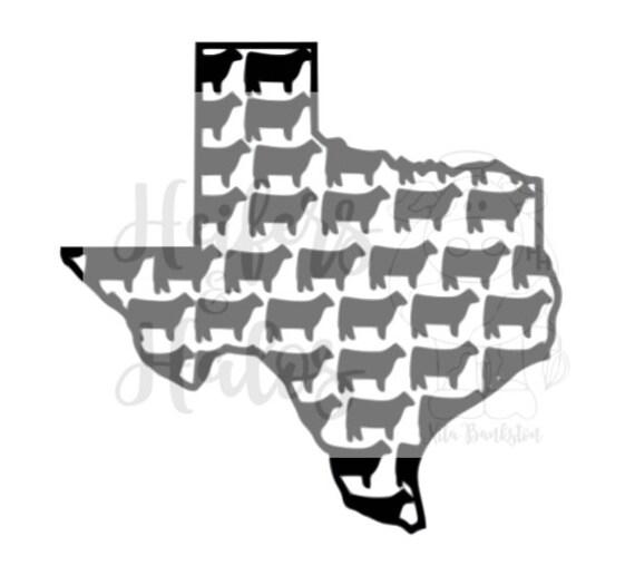 Texas show heifer FFA 4H