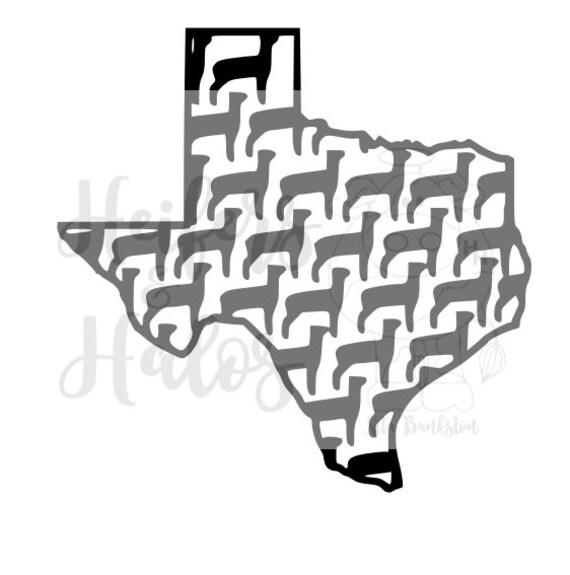 Texas Show Lamb FFA 4H