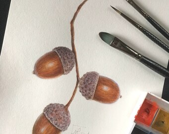 Acorns original botanical watercolour painting. Botanical art, painting of nature,