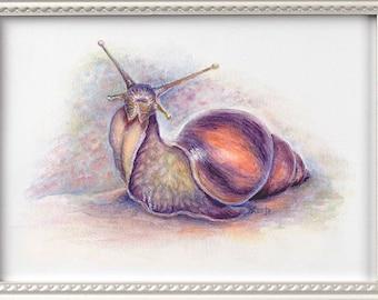 Snail Watercolour Art Print. Snail print, Watercolor Painting of Snail, Snail art, Achatina.