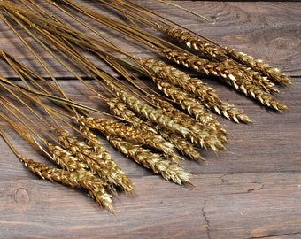 20 Wheat golden steams, natural decor,  winter decor