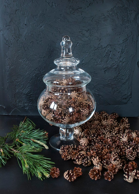 300 small fresh pine cones free shipping rustic home decor etsy