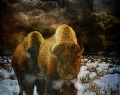 Bison Wall Art. Fine Art Print Buffalo, storm landscape, wild animal art. Extra large, free worldwide delivery.