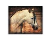 Horse art Print 'Beauty'. Horse, animals, stallion, dressage, Native American, prints, , wall decor. JoWalshArt