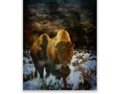 Native American Art Print of 'Storm Bison' American Plains Buffalo.Wild animals, Native American, grandfather, husband, male gift, Xmas gift