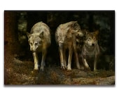 Wolf Art Print 'Three', Pack of Three Wolves. Wolf pack, landscape, animals,dogs,wildlife, wall decor, Xmas gift, JoWalshArt