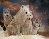 Wolf Art Print, 'Wolves Waiting', Pack of Wolves. Wolf pack, landscape, animals,dogs,wildlife, wall decor,Xmas gift