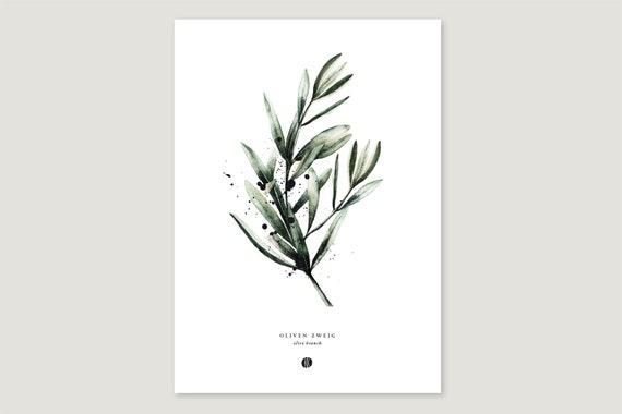 "Art Pressure/Fine Art Print: ""Olive Branch"""