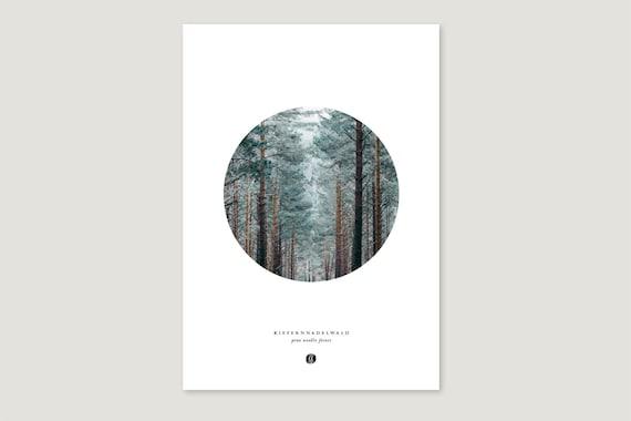 "Art Pressure/Fine Art Print: ""Pine needs.Forest"""