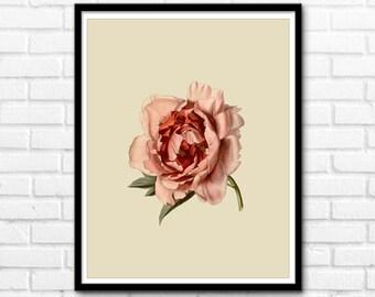 Rose Print, Flower Printable Art, Shabby Chic Rose Nature Decor, Flower Prints, Wall Decor INSTANT DOWNLOAD - 1080