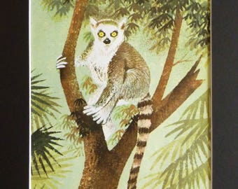 Original 1960's print illustration of a ring-tailed lemur in the jungle including mount