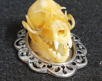 Bat skull pendant. Real skull.