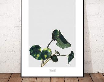 "Big Poster Print ""Monstera 3"" Beautiful Posterprint 42x 54 cm"
