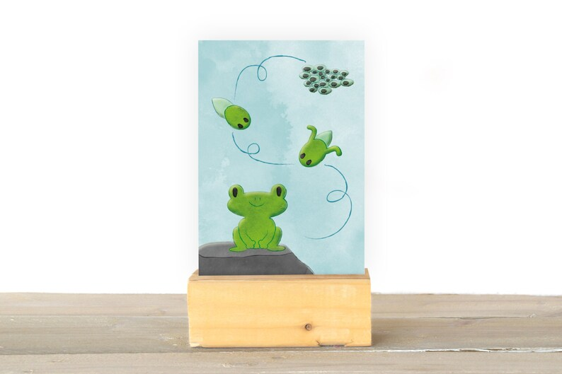 Frogs image 1