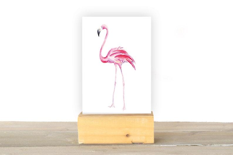 Flamingo image 1
