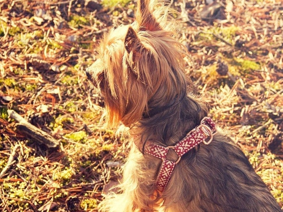 Adjustable dog harness Latvia with rose gold metal details no pull harness soft dog harness small dog harness step in harness