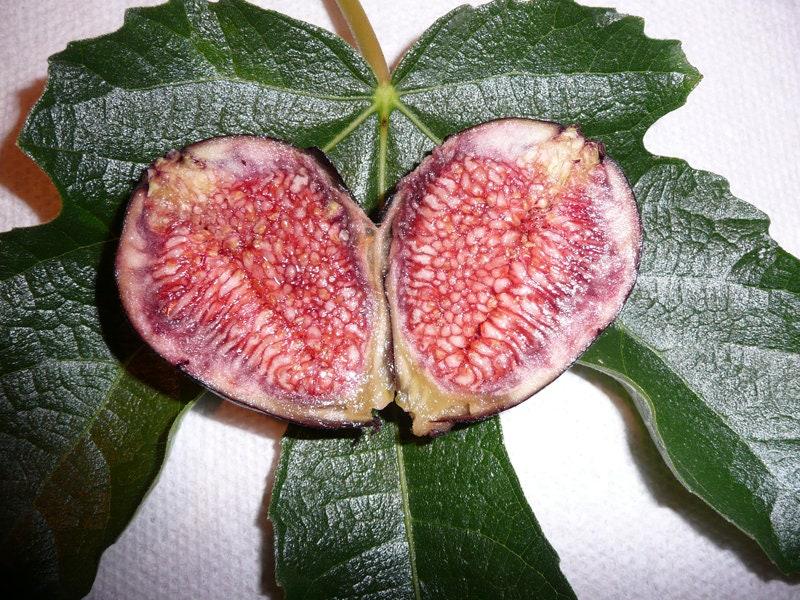 Strawberry Tree 1 to 2   Feet Fall Ship in 1 Gal Pot Arbutus Marina 1 Plants