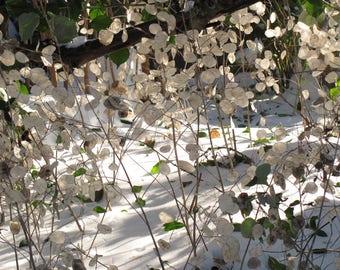 Winter Snow Plant item #4026