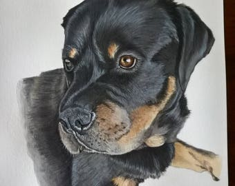 Pet portrait custom hand painted
