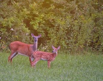 Deer Matted Print