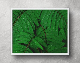 Printable tropical art, Fern wall print, Tropical art, Digital download, Fern leaf print, Fern leaf poster, Fern leaf wall art, Fern art