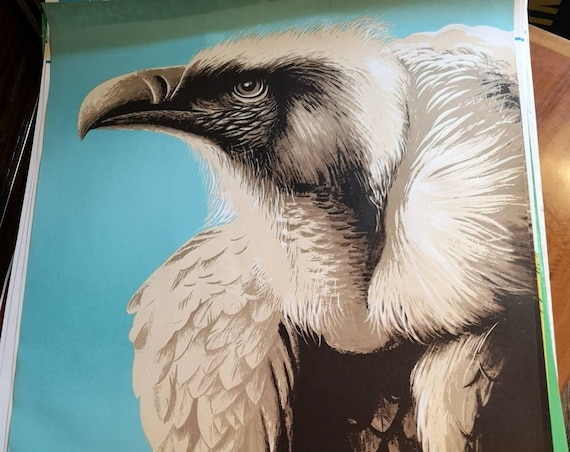Vintage 1960s Tierpark Berlin Original Zoo Poster Advertising Of A Vulture