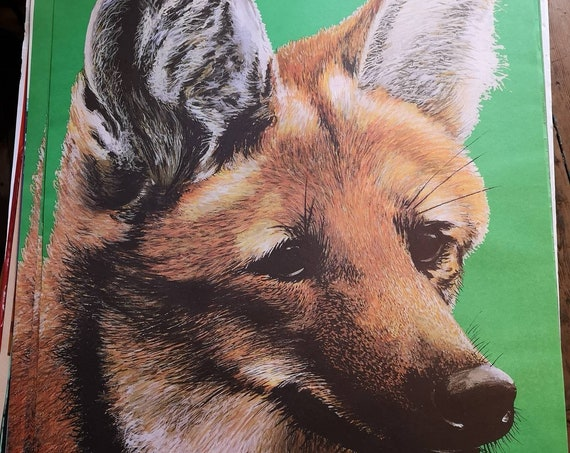Vintage 1980s Tierpark Berlin Original Zoo Poster Advertising Of A Fox