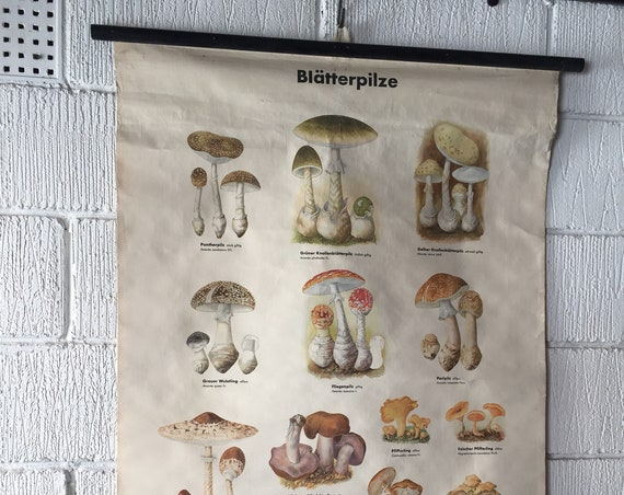 Vintage East German Educational Chart, Roll Down Poster Of Mushrooms By Volk Und Wissen, Berlin