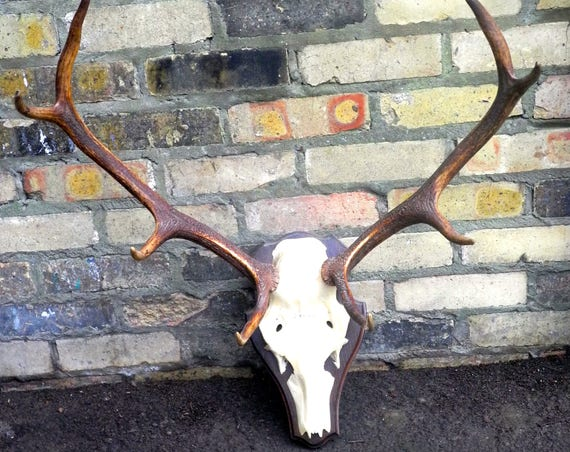 Vintage 8 Point Reindeer Antlers On Plinth Dated 1984