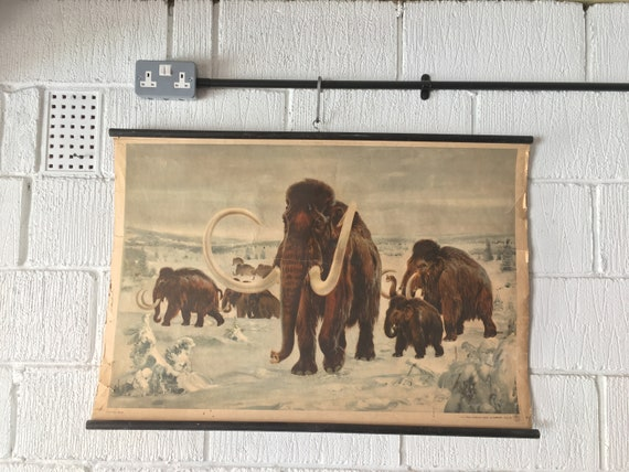 Vintage 1950's Czech School Chart Poster Of A Mammoth By Zedenek Burian