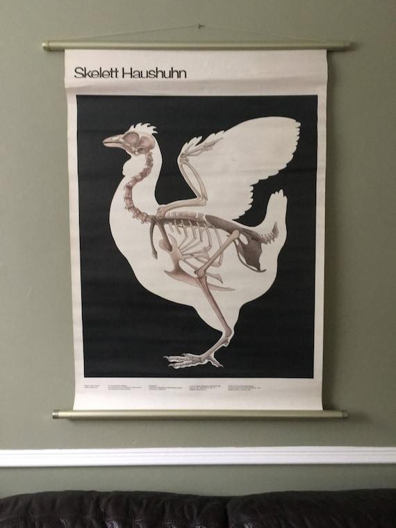Vintage East German Educational Chart, Roll Down Poster Of A Chicken Skeleton By Volk Und Wissen, Berlin