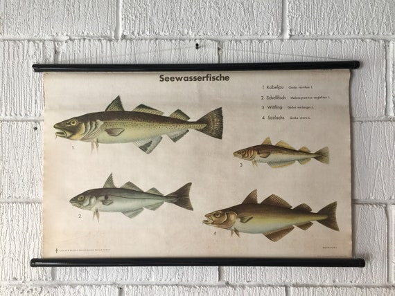 Vintage East German Educational Chart, Roll Down Poster Of A Selection Of Salt Water Fish By Volk Und Wissen, Berlin
