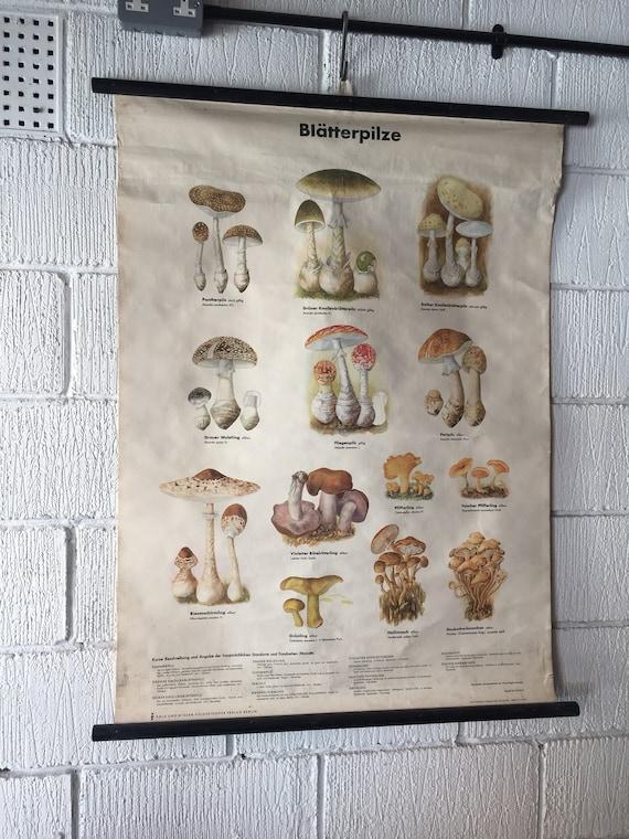 Vintage East German Educational Chart, Roll Down Poster Of Mushrooms By Volk Und Wissen, Berlin