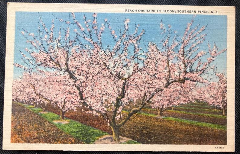 NC Postcard Vintage Southern Pines