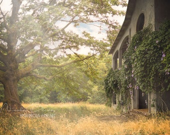 Abandoned House, Digital Backdrop, old, Tree, Sun, Art, download, Fantasy, Photoshop, Composite, premade Background, Photo Manipulation