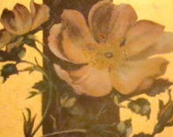 LAST CHANCE SALE Nice Vintage/Antique Floral Postcard # 3
