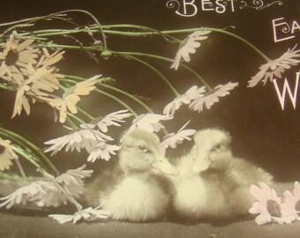 Antique/Vintage Easter RPPC (Ducklings)