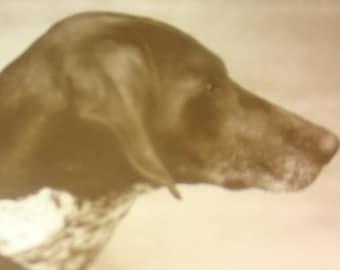 Nice Vintage/Antique RPPC (Dog)