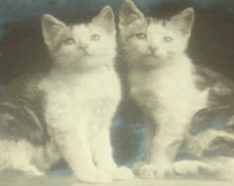 LAST CHANCE SALE Vintage rppc (Cats/Kittens)